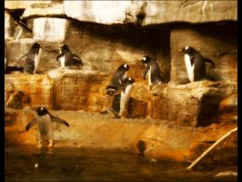 Penguins by BL1nX