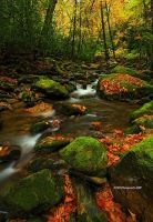 Low Water, Rocky Fork by TRBPhotographyLLC