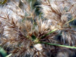 Reed Close Up 3 by radelaidian-stock