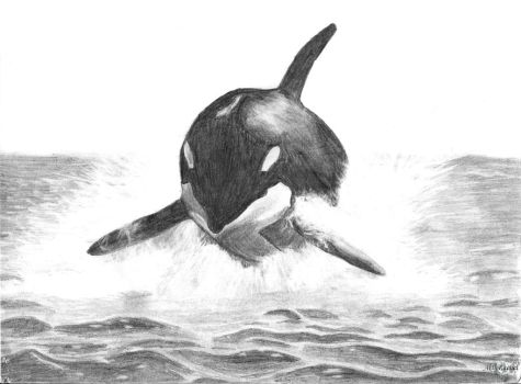 Orca by RacsterArt
