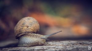 Snailin' Around I by ilkerdemirbolat