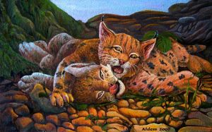Lynx kittens play with each other by AldemButcher