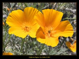 California Poppies I by Eolhin