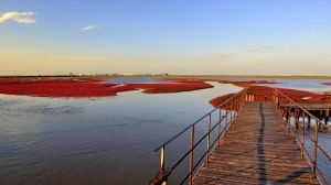 Red Seashore, Liaoning, China n DSC1875w by laogephoto
