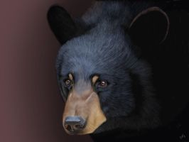 Black Bear by CVDart1990