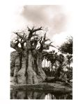 Baobab Tree by erinvi