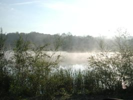 Morning Pond with Mist by matrix7