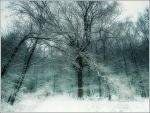 the magic tree by Weissglut