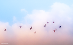 pigeons by Hend25