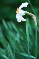 Narcis by marialivia16