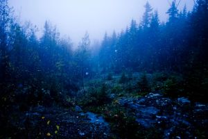 blue forest 01 by lauriecphoto