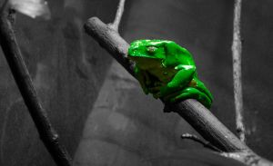 Tree Frog in Touch of Color by AlgeriArts