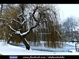 Snow covered tree by unitedcba