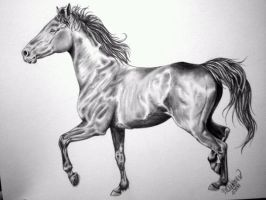 Thoroughbred by CercoAmore