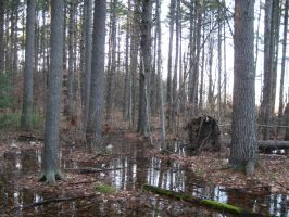 piney swamp land by crazygardener