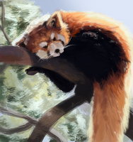Red panda by InkpotBot