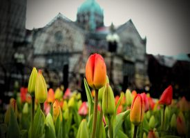 One Among Many by MyLifeThroughTheLens