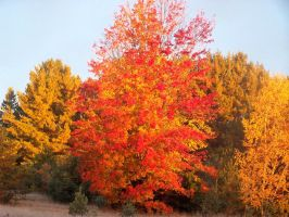 Fall Colours by ElfenLied333