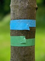 tree with tape by damo3sp