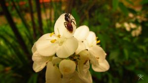 White Flower With a Visitor by REGGDIS