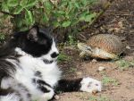 Maya and the Tortoise by hclausen