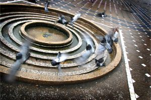 doves by efish