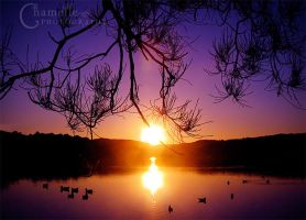 Ducks on lake  Purple sunset by chamelledesigns