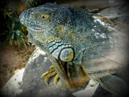 The Lizzard. by Daenel