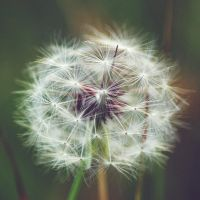 Make a Wish II by 1Mathew7