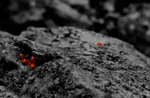 Black and the ladybugs by GrauWeiss