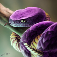 Ekans - Pokedex Project by Sadako-xD