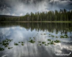 Lily's on a Lake HDR by mjohanson