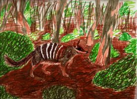 Numbat by Minneral