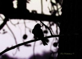 Bird by Toneproductions1