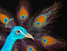 Psychedelic Peacock by themasterofnone