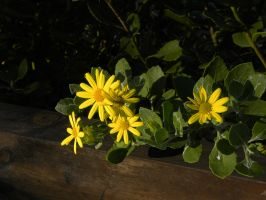 Yellow flowers 2 by RiverKpocc