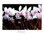 White Flowers by fuz1on
