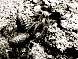 Spider and Pill bugs by ShenaniBOOM