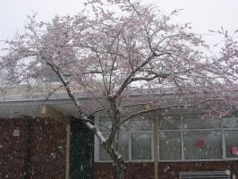 A tree covered in snow. by MistyBlue2010