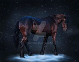 Christmas Stallion by Fereshteh