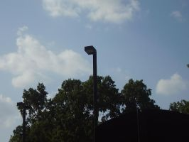 Light Pole Peeks Over A Tree by iluffchinchillas