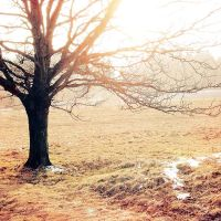 .: big tree :. by all17