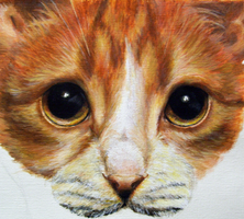Orange Tabby WIP 2 by EcaterinaToutok