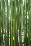 Bamboo by city17