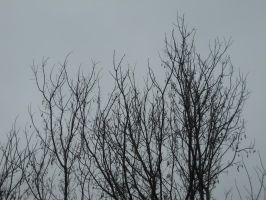 Bare Branches Stock 2 by Orangen-Stock