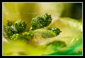 Feeling Green by tleach0608