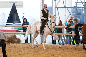 Cremello Lusitano_3 by CalyHoney
