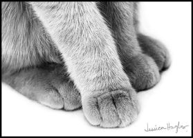 Paws by TimelessImages