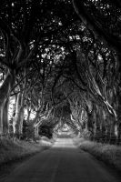 The Dark Hedges by FayeArt