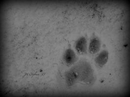 Paw Print in the Snow by Hayes-Designs